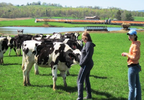 Beth, Elise, and Cows