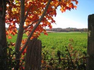 Fall pic 2009