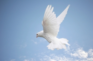 Dove, Bird, Flying, White, Spirituality, Symbols Of Peace, Wing,