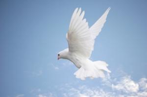 Dove, Bird, Flying, White, Spirituality, Symbols Of Peace, Wing,