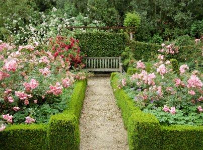 Formal rose garden one writer 39 s way for Formal rose garden layout