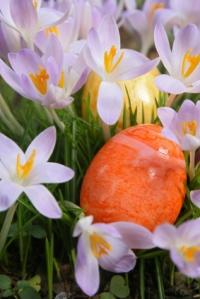 Easter Eggs Hidden in Crocus