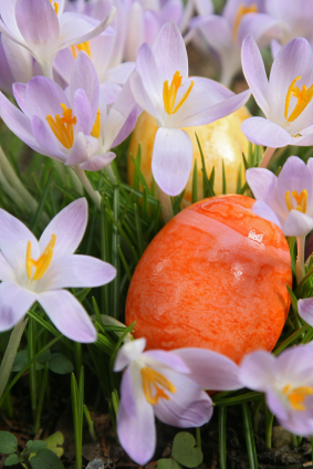 Easter Eggs Hidden in Crocus