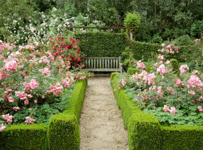Daughter of the stars the research for writing historical for Formal rose garden layout