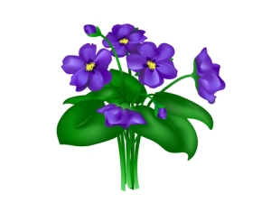 spray of beautiful dark blue violets