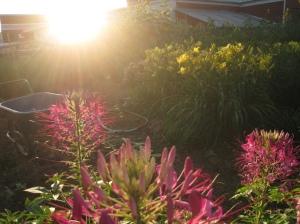 garden in ray of sunshine