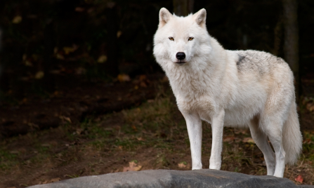 Alpha Dog Full Movie Free Stream
