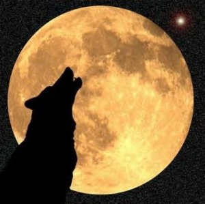 wolf howling at moon