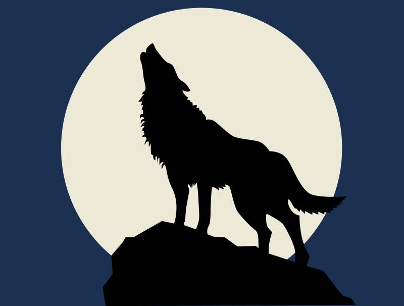 wolf howling at the full moon
