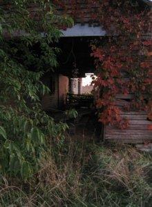old barn with Virgina creeper