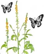 Agrimony, Flower Herb