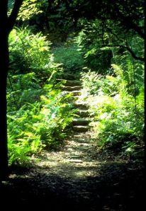 _ferny path, ferny trail through woods