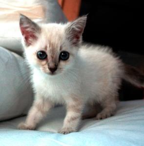 Kitten Pavel