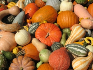 autumn assortment of gords and pumpkins