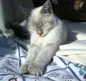 kitty pavel