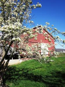 Old red barn April 2011 243