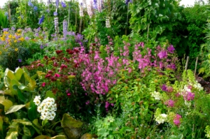 English country garden flowers and herbs