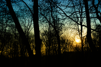 Dark woods at sunset