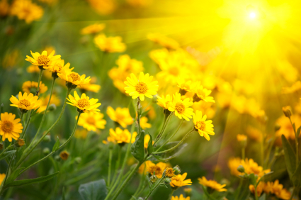 Image result for yellow flowers