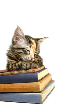 kitten asleep on books