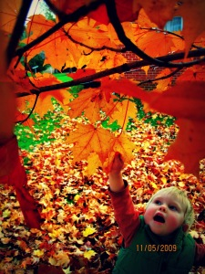 """""""Autumn is a second spring where every leaf is a flower.""""~Fall Quotes and Images--Beth Trissel"""