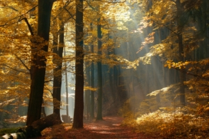 autumn woods, autumn forest,