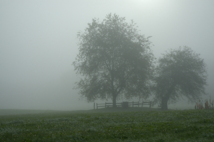 Fog, Farm, Mist, Cemetery, Tree, Wet, Tombstone, Field, Morning, Grave