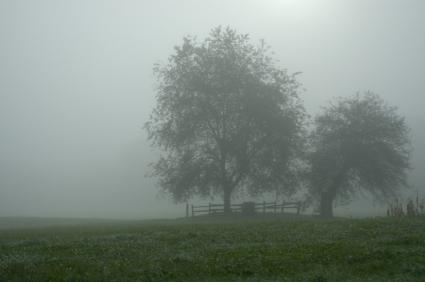 Fog, Farm, Mist, Cemetery, Tree, Wet, Tombstone, Field, Morning, Grave