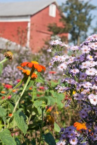 My Fall Garden in the Shenandoah Valley--Beth Trissel