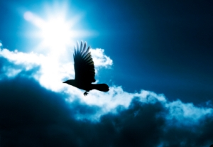 Bird, Flying, Crow, Raven, Sky, Sun