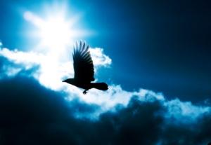 Bird, Flying, Crow, Raven, Sky, Sun