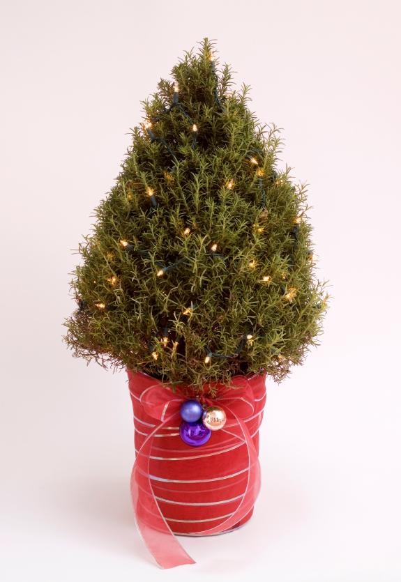 Beth Trissel's Blog - 'Tis the Season for Rosemary ...