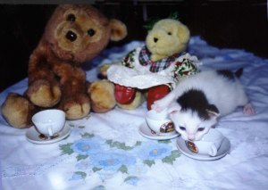 KITTEN TEA PARTY