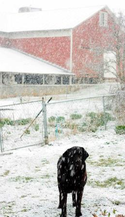 Luca in the snow March 2013