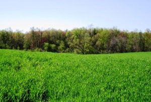 the meadow and woods above our farm