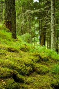 Scotland, Forest, Old, Tree