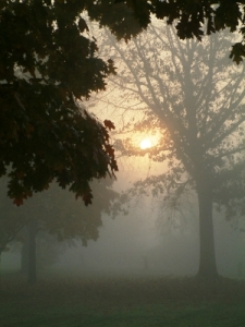 Sun, Fog, Mist, Tree, Morning, Vertical, Soft Focus, Softness