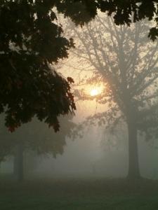 Sun, Fog, Mist, Tree, Morning, Vertical, Soft Focus, Softness