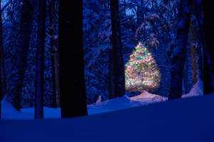 ChristmasTree in Snowy Woods