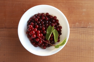 chokecherries in bowel