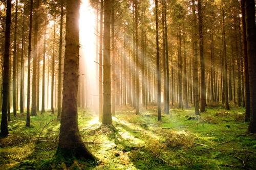 Light Rays through Autumn Woods