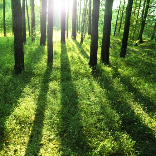 Light Rays Through the Forest