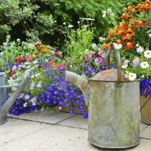 Old Watering Can in Beautiful Garden
