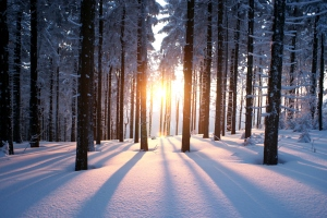 Snowy woods at sunset