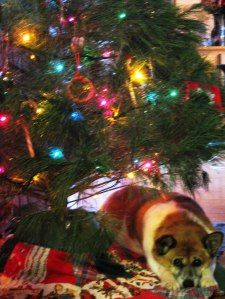 Dog UNDER CHRISTMAS TREE