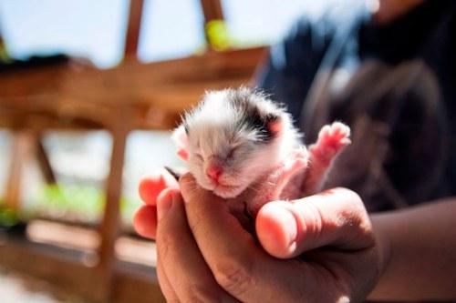 kitten Cedric look alike.jpg1