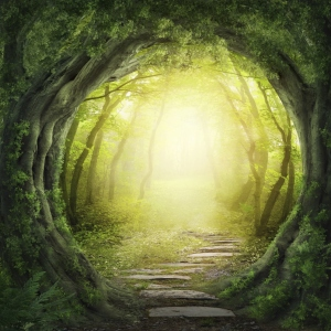 Magical opening through Forest with light behind