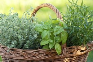 basket of herbs with rosemary