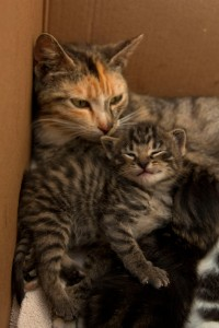 mama cat and happy kitten