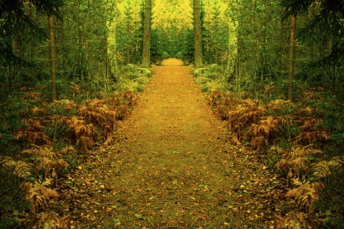 Path to magical forest